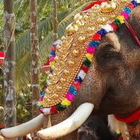 Foto 5 Die vergoldeten Ornamente für Elefanten und handgemachte bunte dekorative Schirme aus Indien.
