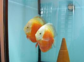 Foto 2 Diskusfische