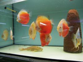 Diskusfische 5 kaufen 1 geschenkt