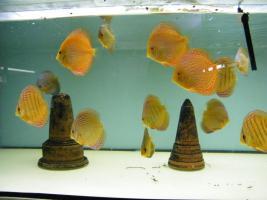 Foto 3 Diskusfische 5 kaufen 1 geschenkt