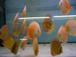 Foto 5 Diskusfische 5 kaufen 1 geschenkt