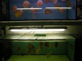 Foto 6 Diskusfische 5 kaufen 1 geschenkt