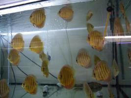 Foto 7 Diskusfische 5 kaufen 1 geschenkt