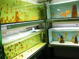 Diskusfische zu günstigen Preisen ab 6 €