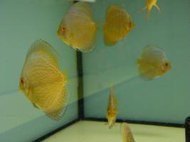 Foto 3 Diskusfische zu g�nstigen Preisen ab 6 �