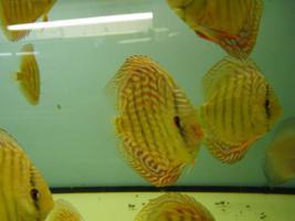 Foto 4 Diskusfische zu g�nstigen Preisen ab 6 �