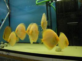 Foto 5 Diskusfische zu g�nstigen Preisen ab 6 �