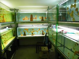 Foto 6 Diskusfische zu günstigen Preisen ab 6 €