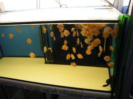 Foto 5 Diskusfische zu  günstigen Preisen