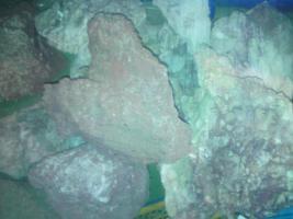 Foto 8 Diverses Aquarium Zubeh�r g�nstig