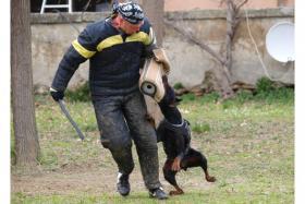 Foto 11 Dobermann Welpen 3,5 Monate - FCI Zucht