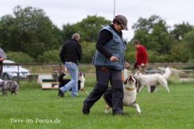 Dog-Sport-Gemeinschaft Flensburg bietet neue Kurse für Hundeausbildung an