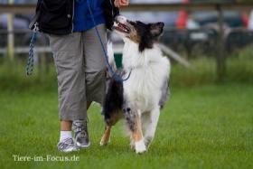 Foto 2 Dog-Sport-Gemeinschaft Flensburg bietet neue Kurse für Hundeausbildung an