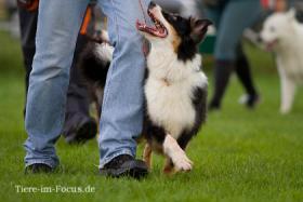 Foto 3 Dog-Sport-Gemeinschaft Flensburg bietet neue Kurse für Hundeausbildung an