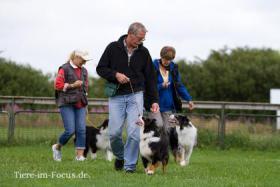 Foto 4 Dog-Sport-Gemeinschaft Flensburg bietet neue Kurse für Hundeausbildung an