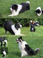DogDancing, Hundetraining, Hundeschule