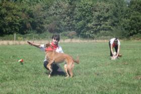 Foto 5 Dogdance für Jederhund - mit handicap - graue Schnauze - oder gesund und Hundfreunde mit handicap