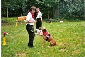 Foto 6 Dogdance für Jederhund - mit handicap - graue Schnauze - oder gesund und Hundfreunde mit handicap