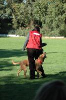 Foto 8 Dogdance für Jederhund - mit handicap - graue Schnauze - oder gesund und Hundfreunde mit handicap