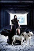 Foto 2 Dogo Argentino Welpe zu verkaufen