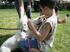 Foto 4 Dogo Argentino Welpen zu verkaufen