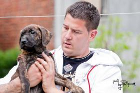 Dogo Canario suße Welpen zu verkaufen