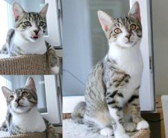 Drei Katzenkinder auf Heimatsuche