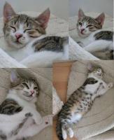 Foto 2 Drei Katzenkinder auf Heimatsuche