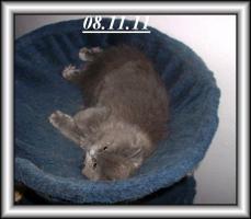 Drei Kuschelperser m. P. suchen ab sofort oder später neue Katzeneltern