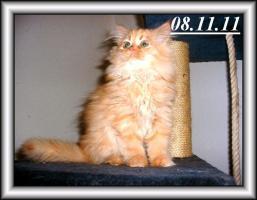 Foto 3 Drei Kuschelperser m. P. suchen ab sofort oder später neue Katzeneltern