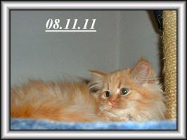Foto 4 Drei Kuschelperser m. P. suchen ab sofort oder später neue Katzeneltern