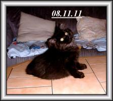 Foto 5 Drei Kuschelperser m. P. suchen ab sofort oder später neue Katzeneltern