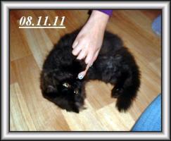 Foto 6 Drei Kuschelperser m. P. suchen ab sofort oder später neue Katzeneltern