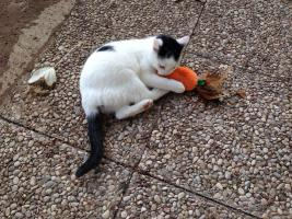 Drei kleine Kätzchen auf die Suche nach Liebe