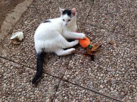 Foto 5 Drei kleine Kätzchen auf die Suche nach Liebe