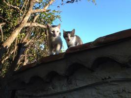 Foto 6 Drei kleine Kätzchen auf die Suche nach Liebe