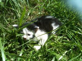 Foto 2 Drei süsse Bauernhof Kätzchen zu verschenken