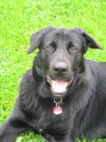 Dringend. Hübscher Mischlingshund sucht zuhause
