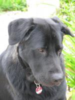 Foto 2 Dringend. Hübscher Mischlingshund sucht zuhause