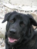 Foto 3 Dringend. Hübscher Mischlingshund sucht zuhause