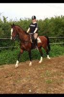 Du liebst den Umgang mit Pferden? Denn suchen wir dich