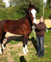 Foto 4 Du liebst den Umgang mit Pferden? Denn suchen wir dich
