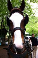 Foto 6 Du liebst den Umgang mit Pferden? Denn suchen wir dich