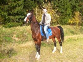 Foto 7 Du liebst den Umgang mit Pferden? Denn suchen wir dich