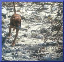 Foto 3 Dummykurs für Einsteiger ab 26.03.2011 in 48493 Wettringen