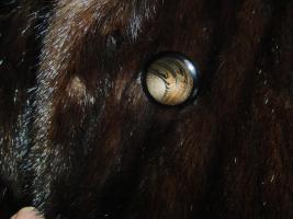Foto 4 Dunkelbrauner Nerzmantel - Größe 38/40 zu verkaufen