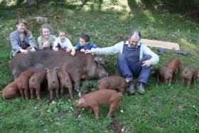Foto 7 Duroc-Schwein reinrassig