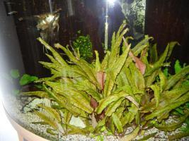 Foto 3 Eck Aquarium 180 L mit Unterschrank kplt.eingerichtet