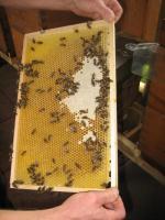Eigenen Honig ernten - Bienen betreuen - Imker werden