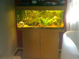 Ein Aquarium Juwel